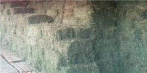 Lucernă - imagine 1