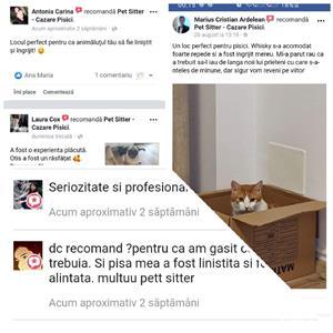 Pet Sitter & Cazare Pisici - imagine 3