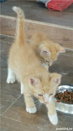 Oferim spre adopție un motănel!!  - imagine 3