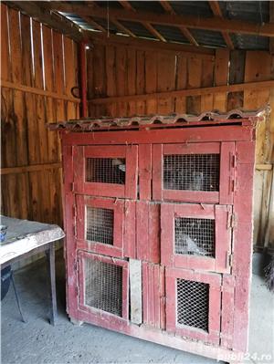 vand custi pentru iepuri in lei sau schimb lemne de foc - imagine 3