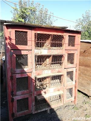 vand custi pentru iepuri in lei sau schimb lemne de foc - imagine 2