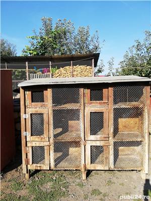 vand custi pentru iepuri in lei sau schimb lemne de foc - imagine 1
