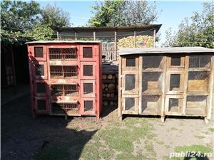 vand custi pentru iepuri in lei sau schimb lemne de foc - imagine 4