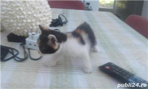 pisicute dragute asteapta sa fie adoptate - imagine 1