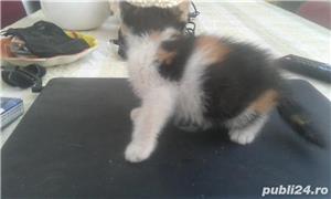 pisicute dragute asteapta sa fie adoptate - imagine 2