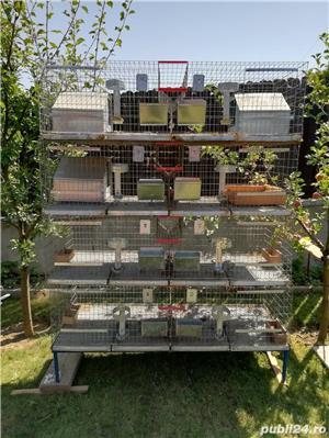 Vând cușcă iepuri în sistem modular cu 8 compartimente - imagine 1