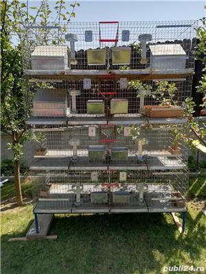 Vând cușcă iepuri în sistem modular cu 8 compartimente - imagine 4