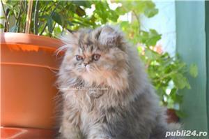 Pisicuta persana superba ! - imagine 4