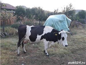 Vand vacă   - imagine 2