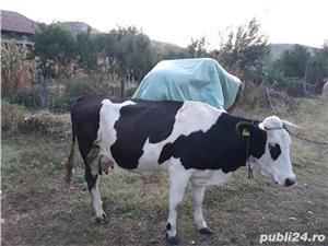 Vand vacă   - imagine 3