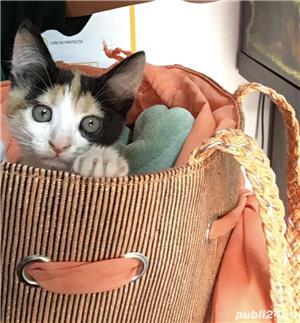 Pisicuta superba si super jucausa pt adoptie! - imagine 3