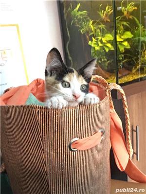 Pisicuta superba si super jucausa pt adoptie! - imagine 1