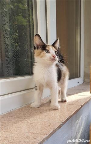 Pisicuta superba si super jucausa pt adoptie! - imagine 4