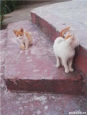 Donez doua pisicuțe  - imagine 6