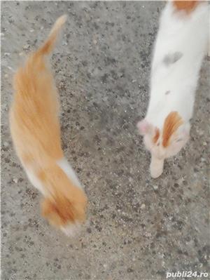 Donez doua pisicuțe  - imagine 9