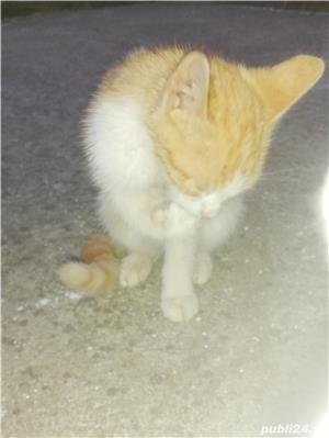 Donez doua pisicuțe  - imagine 7