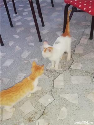 Donez doua pisicuțe  - imagine 10