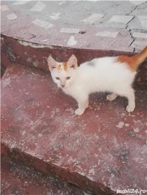 Donez doua pisicuțe  - imagine 3