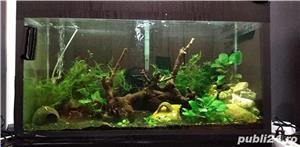 Vand acvariu 120L - imagine 13