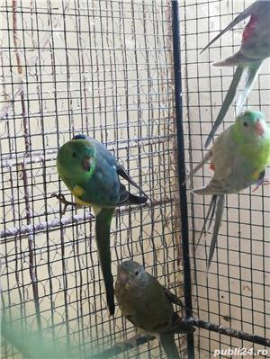 Vind papagali - imagine 4