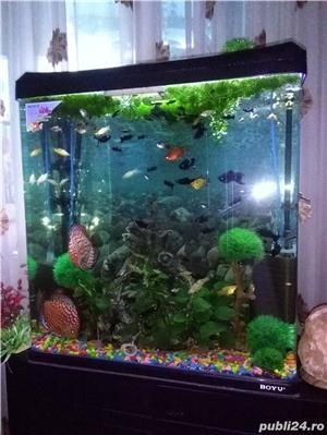 Vand urgent acvariu - imagine 3