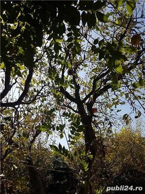 Localitatea Marasesti – de vanzare Casa cu teren ! Vie si pomi fructiferi ! - imagine 3