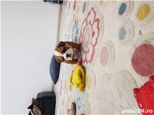 Bulldog englez  - imagine 3
