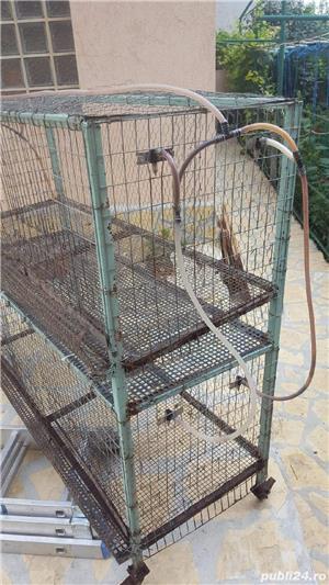 Maternitate pasari + baterii prepelite, găini, iepuri. - imagine 3