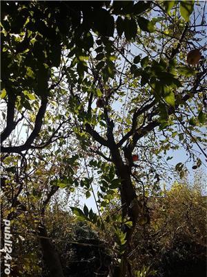 Localitatea Marasesti - de vanzare Casa cu teren ! Vie si pomi fructiferi ! - imagine 5