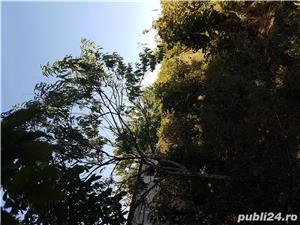 Localitatea Marasesti - de vanzare Casa cu teren ! Vie si pomi fructiferi ! - imagine 4