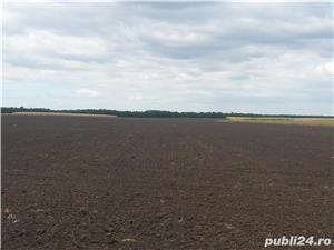 Vând 1,5 ha teren arabil în comuna Valea Mărului, sat Mândrești, jud. Galați - imagine 2