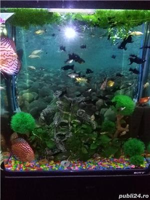 Vand urgent acvariu - imagine 5