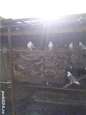 Porumbei  - imagine 3