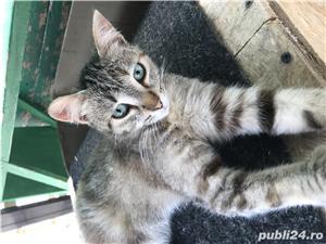 Pisici spre adoptie - imagine 1