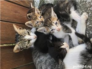 Pisici spre adoptie - imagine 5