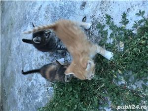 Pisici spre adoptie - imagine 3
