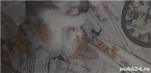 Donez pisicuță - imagine 1