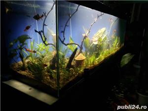 Vand acvariu - imagine 3