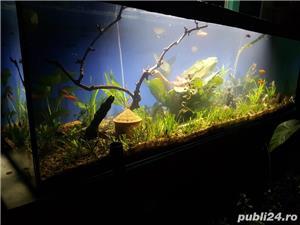 Vand acvariu - imagine 2