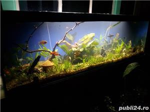 Vand acvariu - imagine 4
