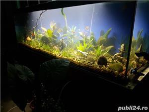 Vand acvariu - imagine 1