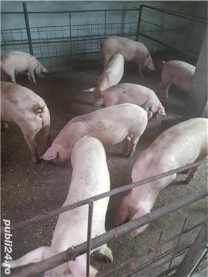 Vand porci! - imagine 5