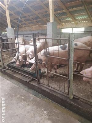 Vand porci! - imagine 2