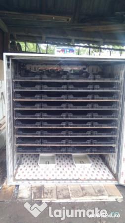 incubator 1620 oua gaina automat  - imagine 5