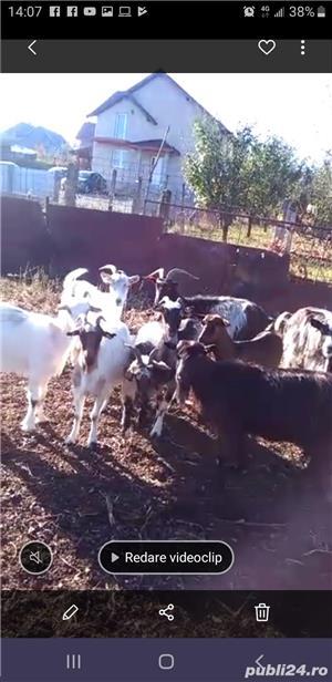 Vând capre mixte - imagine 2