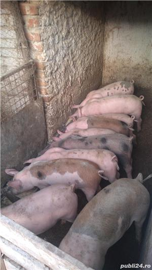 Purcei de carne - imagine 3