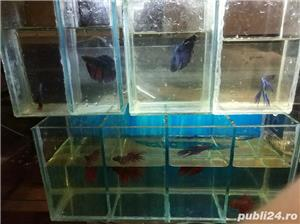 Vand pesti acvariu betta  - imagine 4