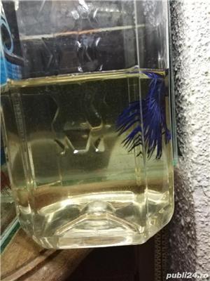 Vand pesti acvariu betta  - imagine 5