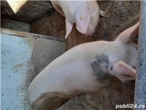 Vand porcii - imagine 2