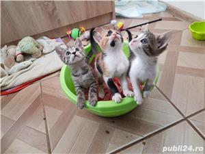 Donez 3 pui de pisica - imagine 2